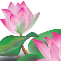 Create A Lotus Flower With Adobe Illustrator CS5