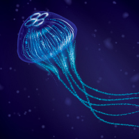 Create a Jellyfish with Brushes in Adobe Illustrator CS5
