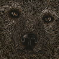 How to Create a Scratchboard Effect Bear Portrait