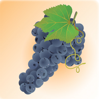 How to Illustrate Deliciously Realistic Grapes using Simple Techniques