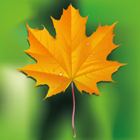 How to Draw a Fall Leaf Using Adobe Illustrator